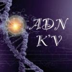 ADN Kv